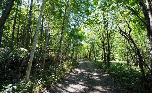 Nakafurano Forest Park