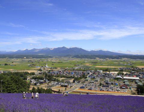 Lavender Field Peak