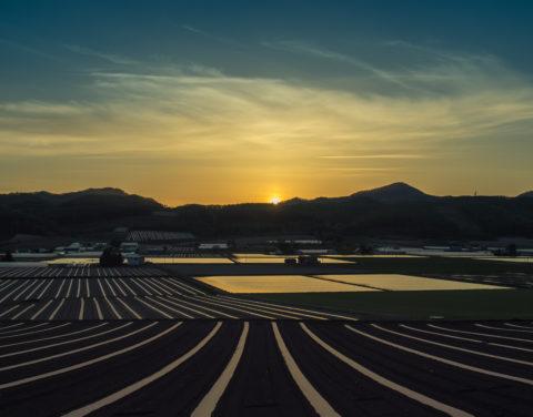 春の夕方の畑